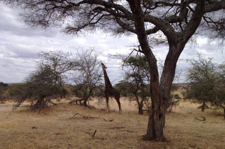 نصائح لزيارة تنزانيا Tanzania، اجمل الدول في أفريقيا