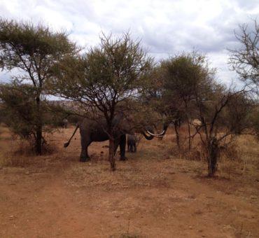 نصائح لزيارة السفاري في تنزانيا، الحديقة Tarangire